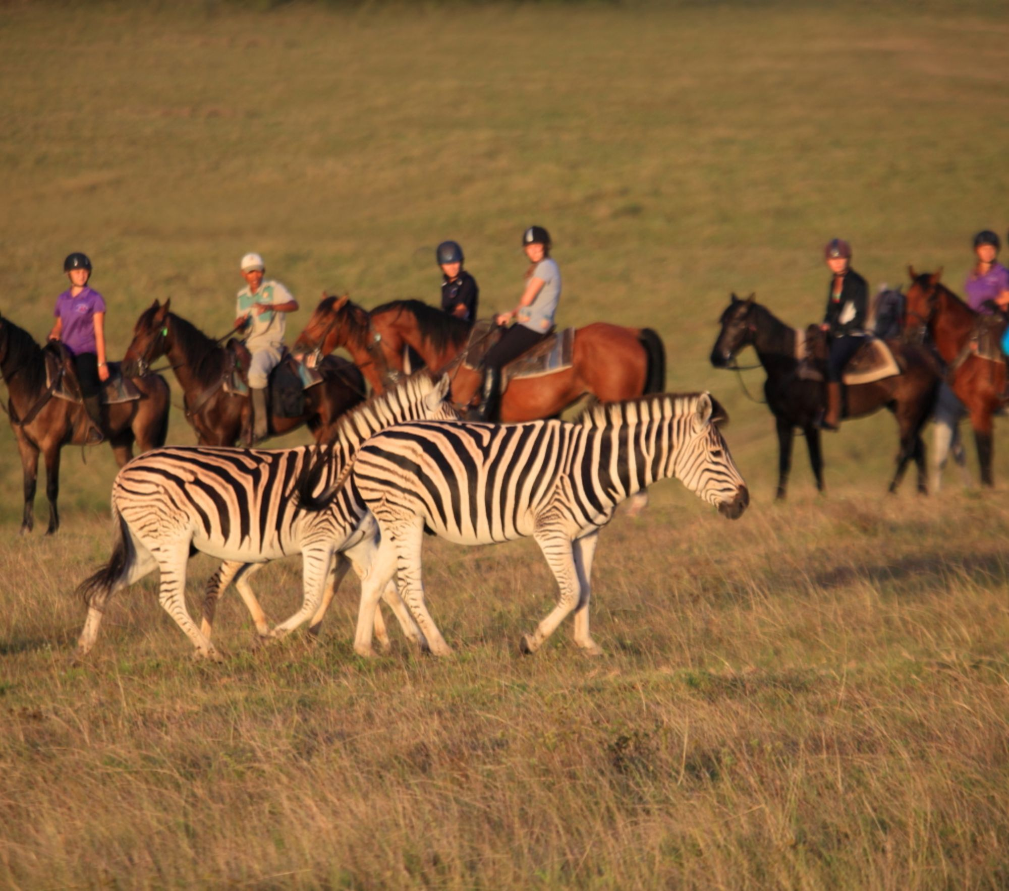 Safaris Down South