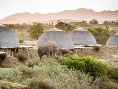 Kwena Lodge Ellies_DSC8946
