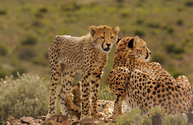 Safaris Down South - Gondwana Family Lodge at Sanbona