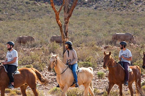Safaris Down South - Horseback Safari Combo