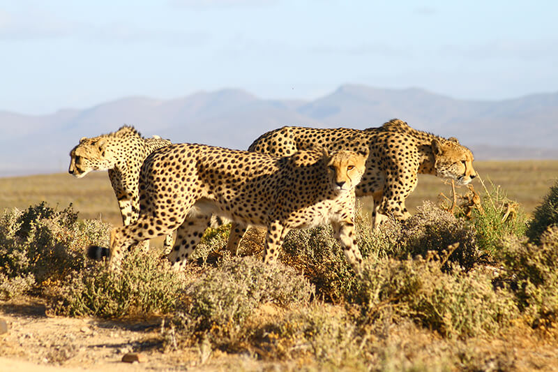 Safaris Down South - The Safari Lodge at Inverdoorn