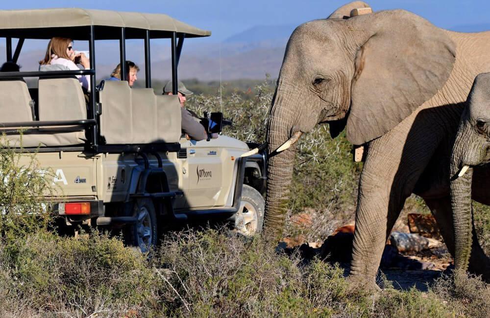 Safaris Down South - Sanbona Game Reserve