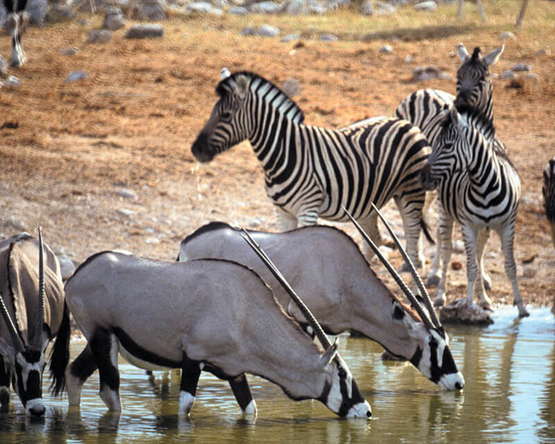 Safaris Down South - Safari Lodge at Aquila