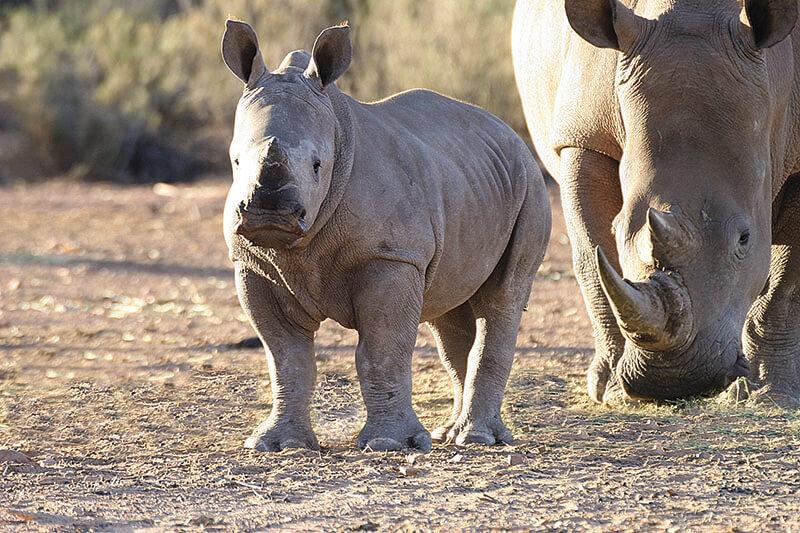 Safaris Down South - Cape Town Day Safari