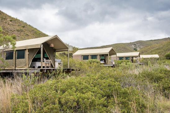 Safaris Down South - Gondwana - Tented Eco Camp