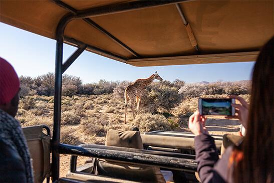 Safaris Down South - Inverdoorn - Safari Lodge
