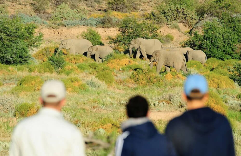 Safaris Down South - Explorer Camp at Sanbona