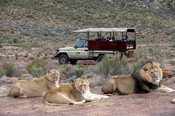 Safaris Down South - Open 4x4 Safari Drive