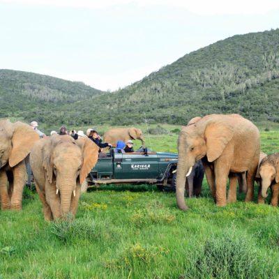 Eastern Cape Safari