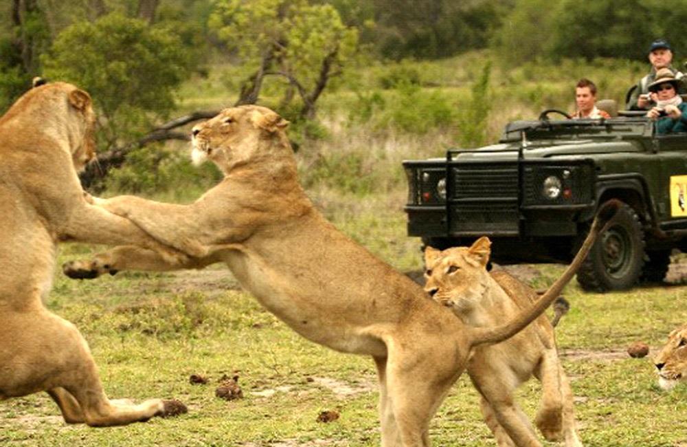 african safari myths