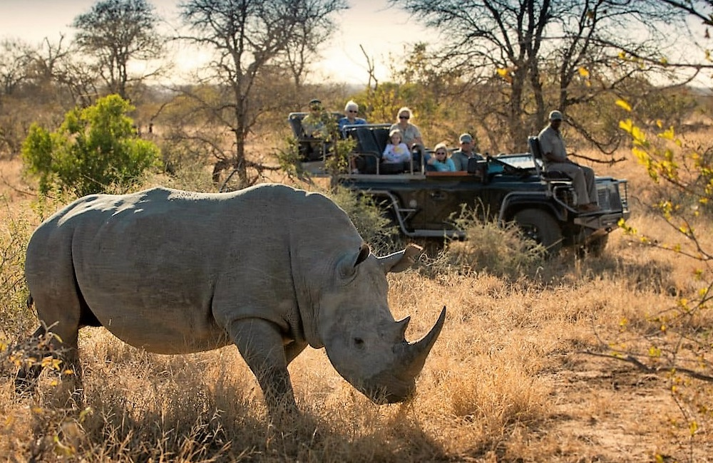 is going on safari dangerous
