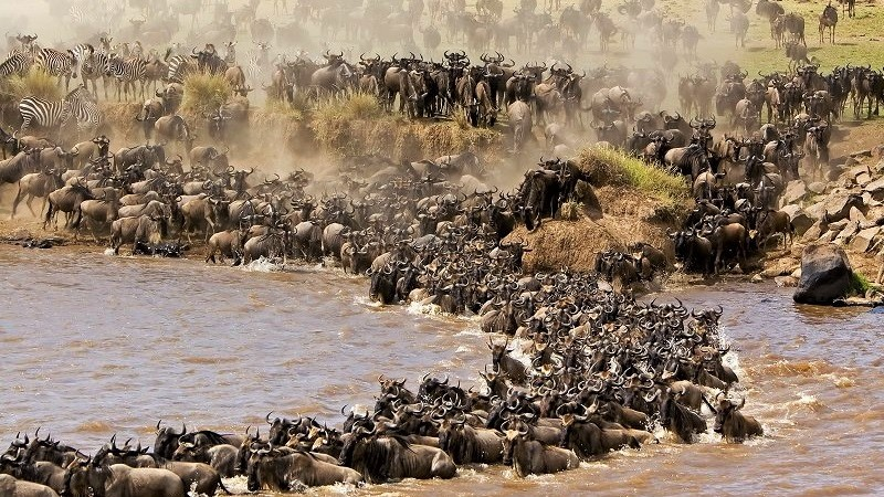 Game reserves in Africa