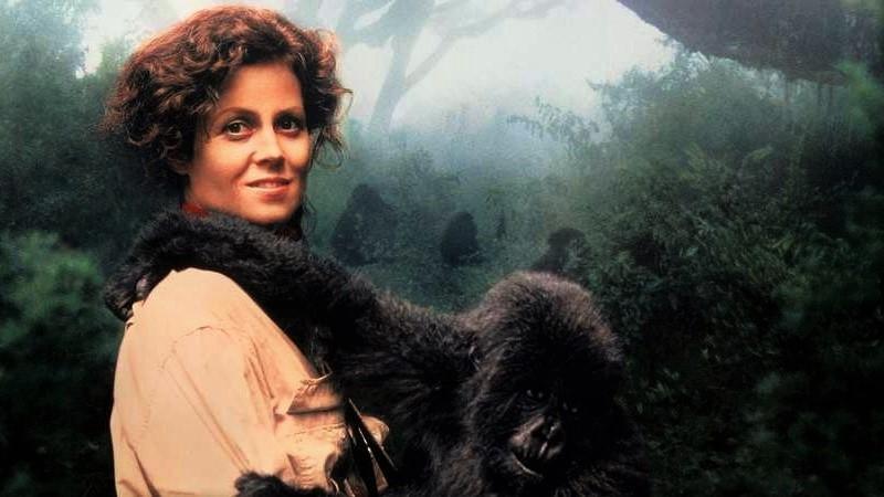 Safari film classics
