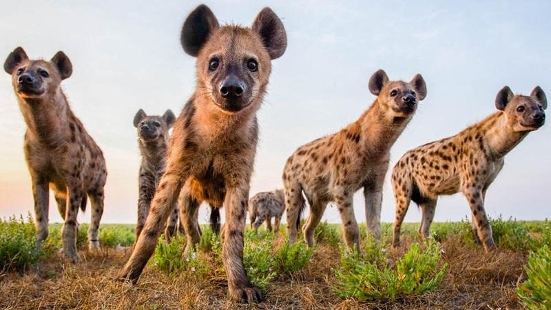 Safari rules and etiquette