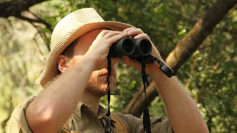 Safari wildlife viewing