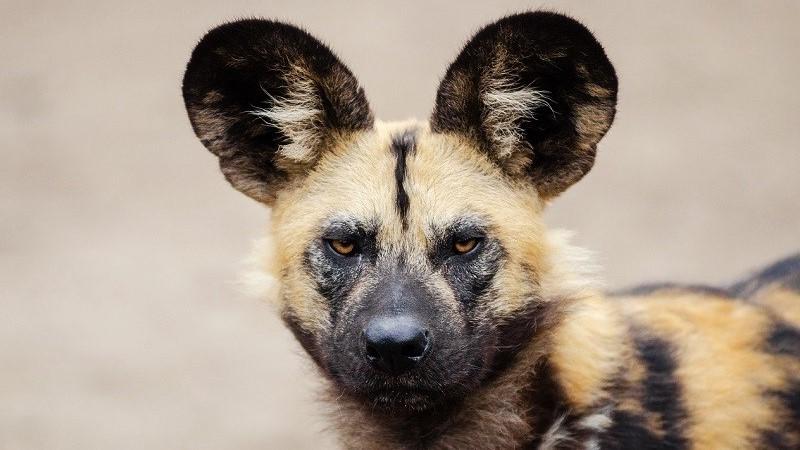 Safari wildlife photos