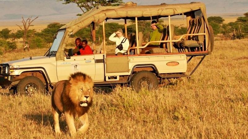 Travel trends safari